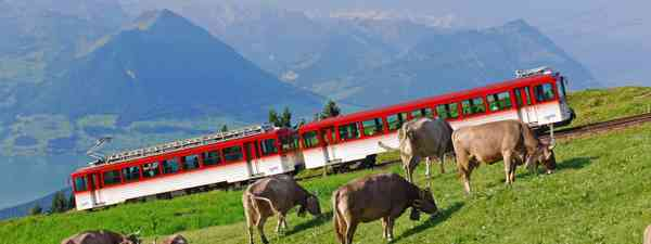 Taking the train to Mount Rigi is one of the best things to do in Lucerne