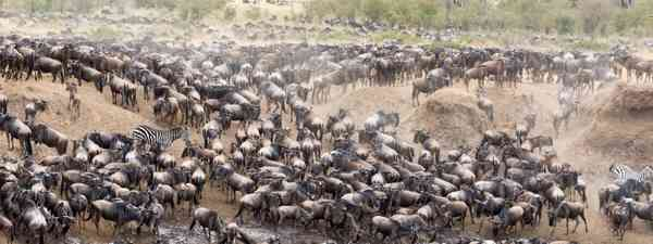 Gathering at the Masai river (Dreamstime)