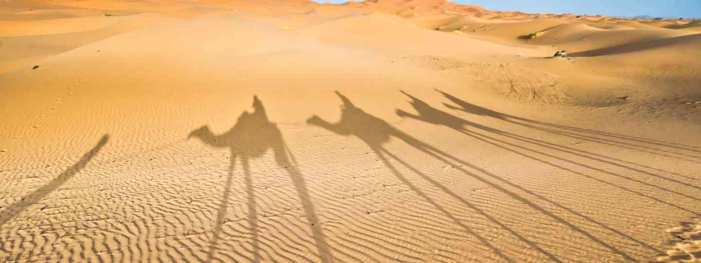 Shadows of camels walking on the dunes of Sahara desert (Dreamstime)