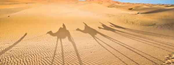 Shadows of camels walking on the dunes of the Sahara desert (Dreamstime)
