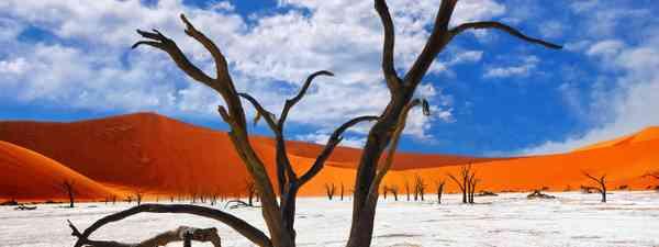 Camelthorn Trees in Deadvlei, Sossusvlei (Shutterstock)