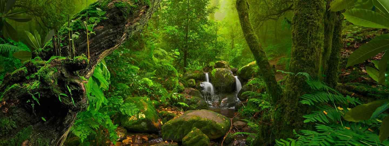 Tropical rainforest (Shutterstock)