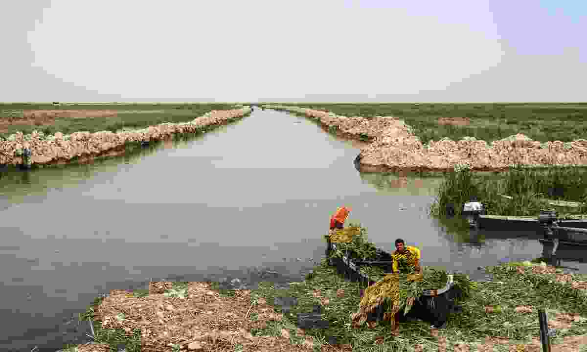 Mesopotamian Marshes, habitat of Marsh Arabs (Dreamstime)