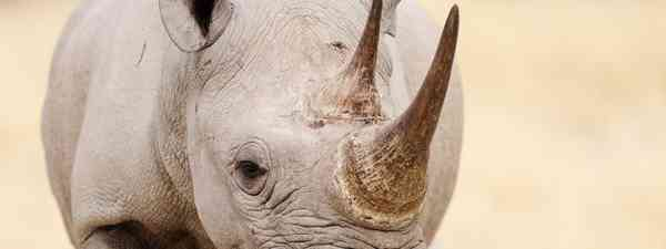 Rhino (Dreamstime)