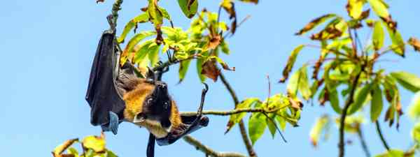 Bats are just one potential carrier of rabies you might encounter, although any mammal can carry the disease (Dreamstime)