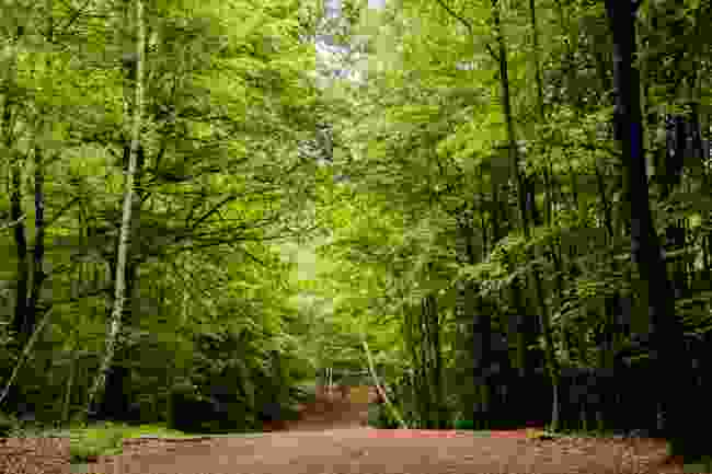 Epping Forest (Shutterstock)