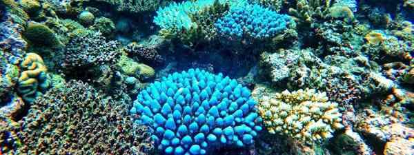 Colourful coral (Shutterstock)