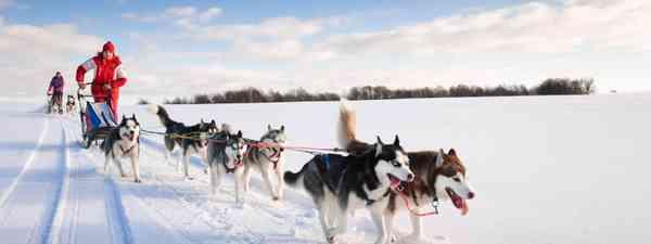 Husky dog sledding (Shutterstock)
