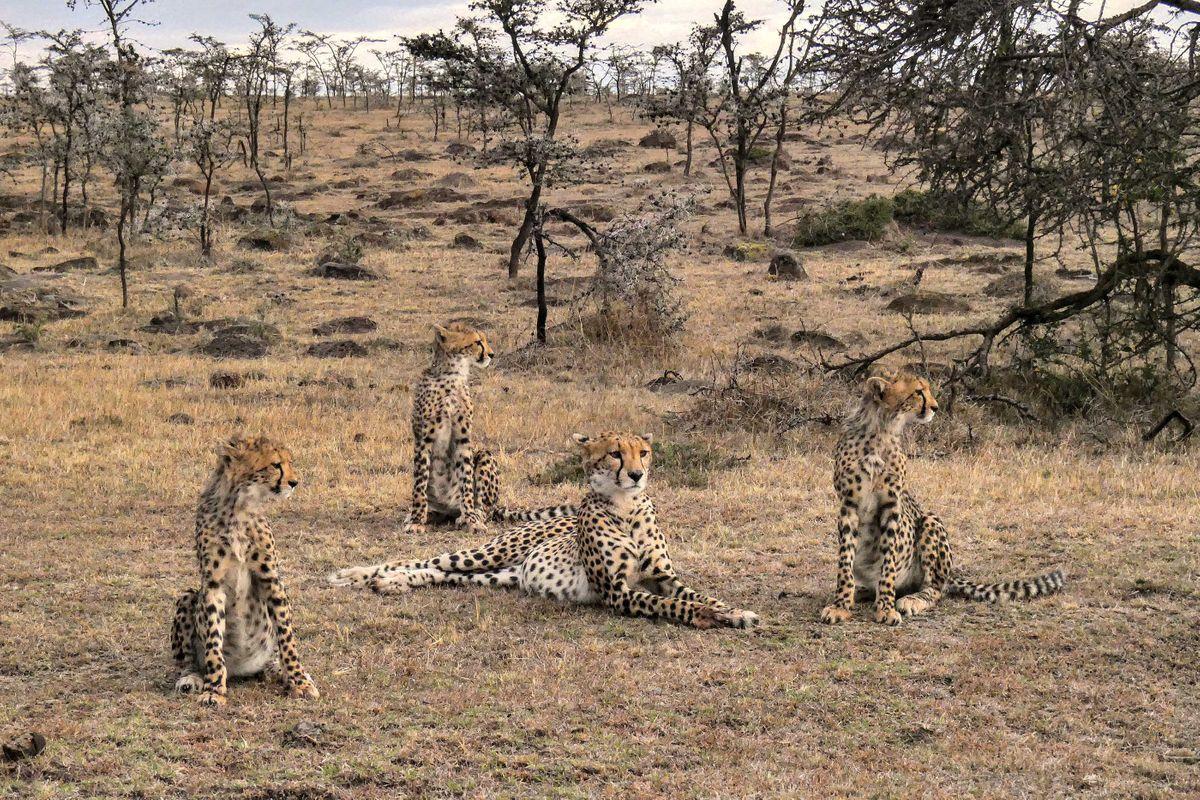 Andrea Montenegro En Latin Lover a wild walk through kenya's masai mara conservancies