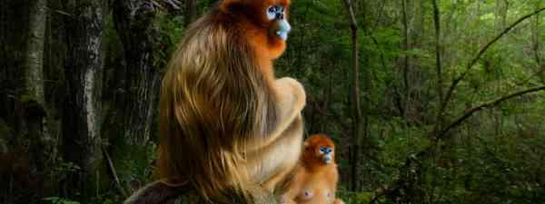Grand Title Winner, Animal Portraits 'The golden couple' (Marsel Van Oosten)