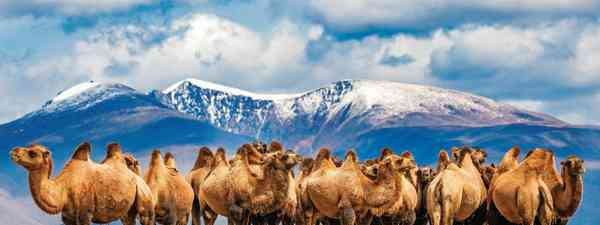 Why you should travel to the Altai Mountains in West Mongolia if you want a remote escape (Marcus Westberg)
