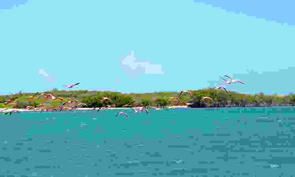 Flamingos in the Dominican Republic (Shutterstock)