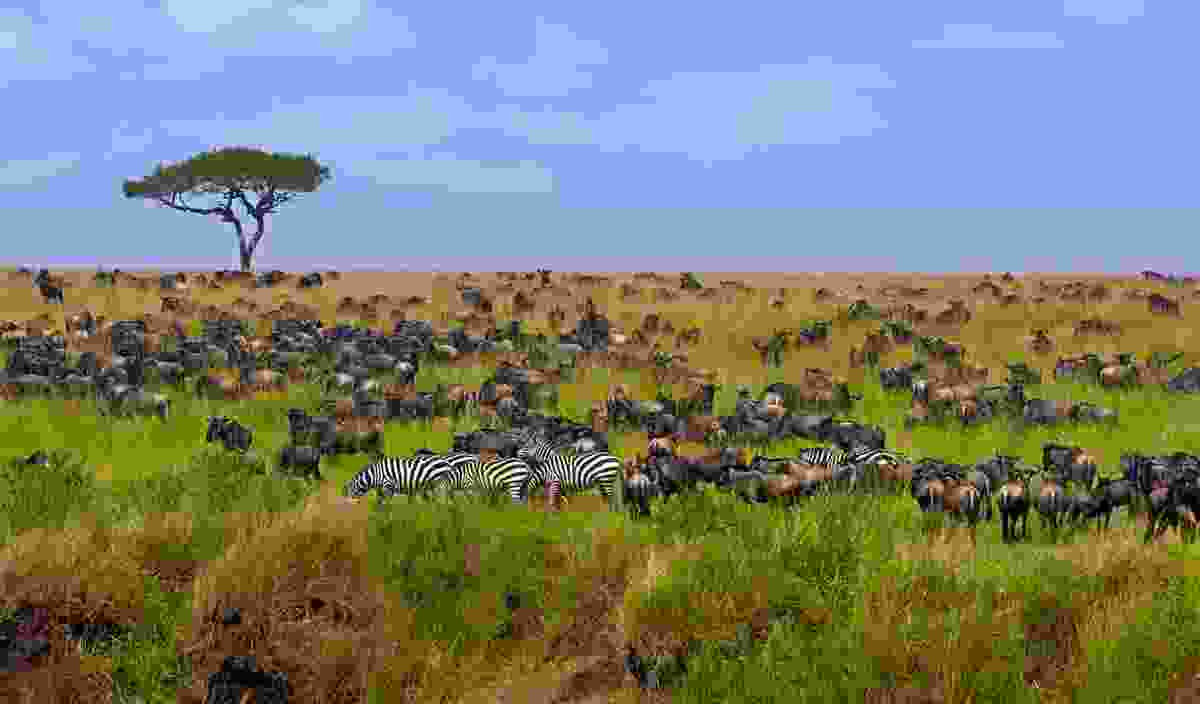 Masai Mara, Kenya. (Dreamstime)
