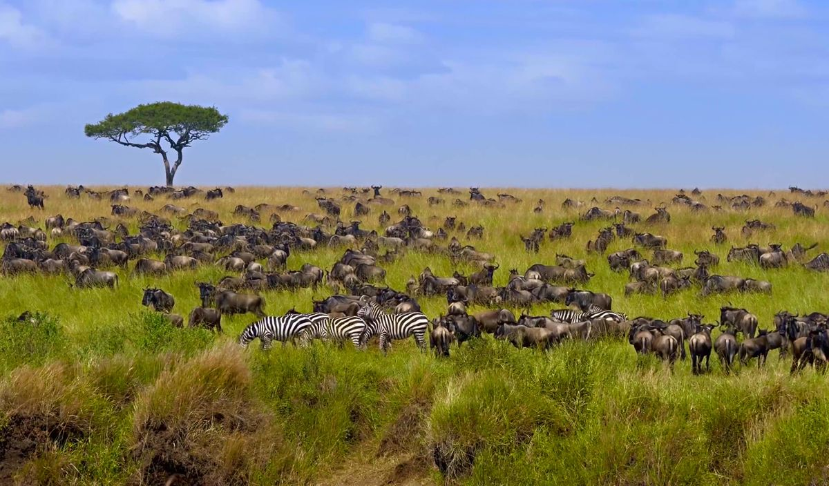 The best African safaris for every kind of traveller | Wanderlust