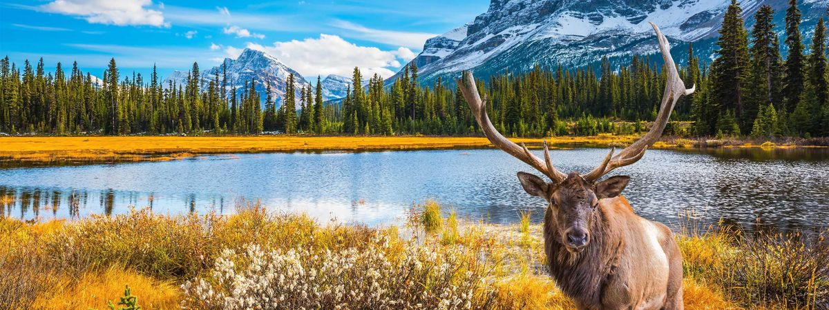 The ultimate Wanderlust guide to Canada