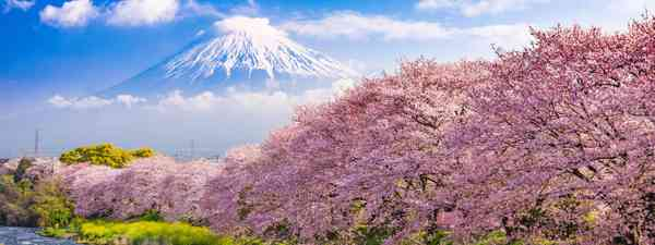 Japan through the seasons: Wanderlust reader event