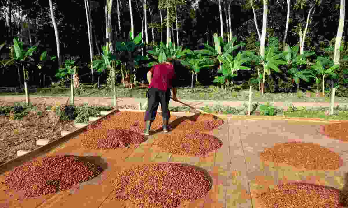 Colombian chocolate farm (Wild Frontiers)
