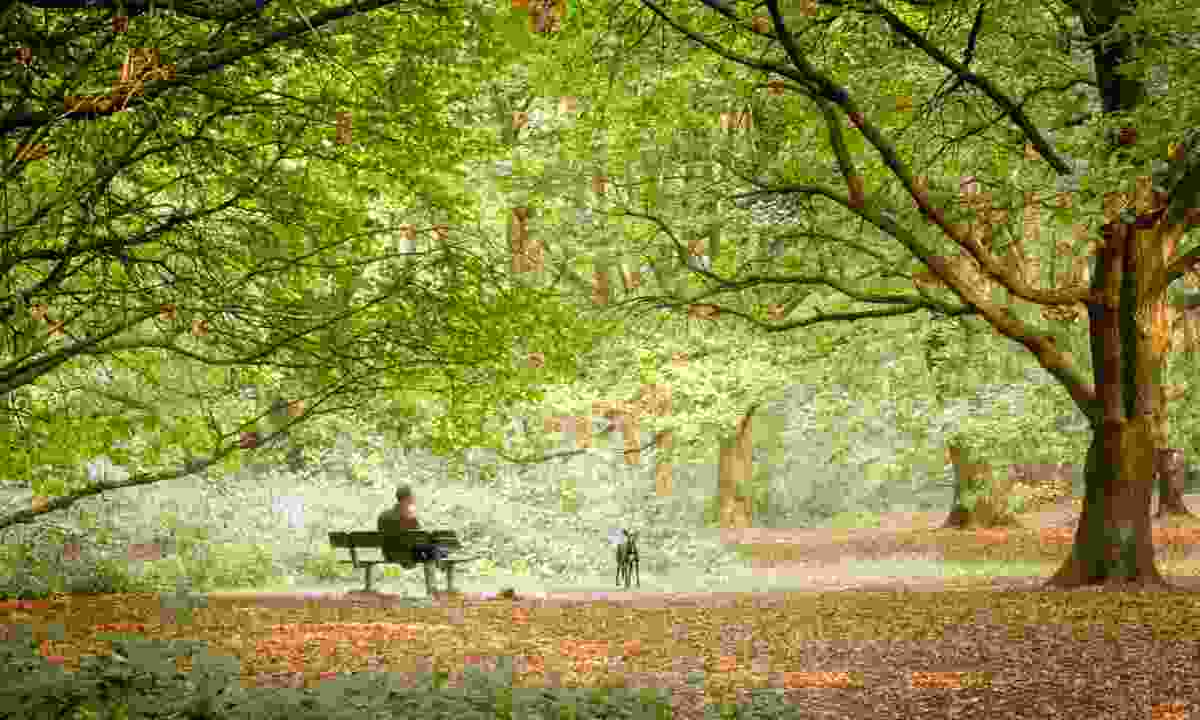 Man sat on a bench close to Kenwood House (Terry Gibbins)