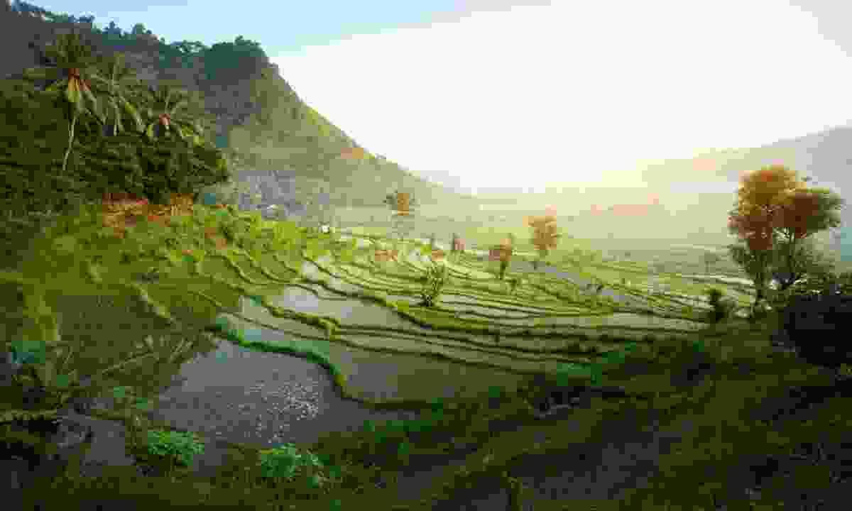 Rice terraces in Bali (Dreamstime)