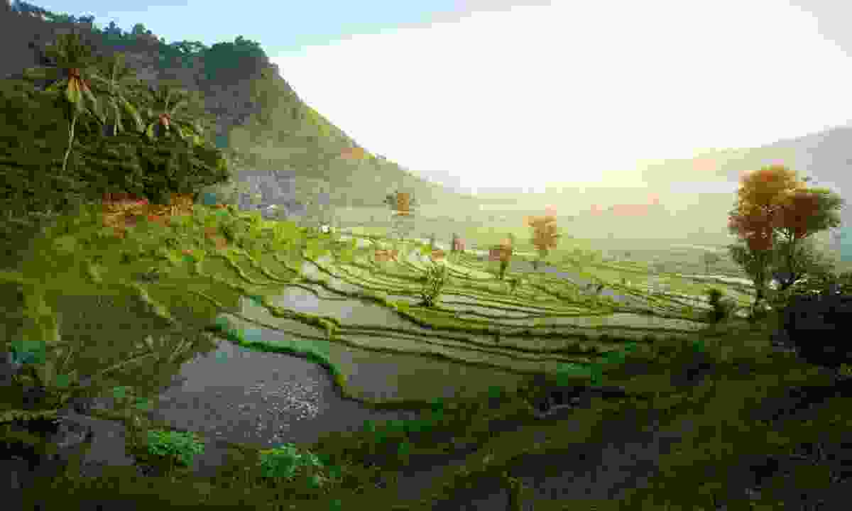 Rice terraces in Bali (Dreamstime)