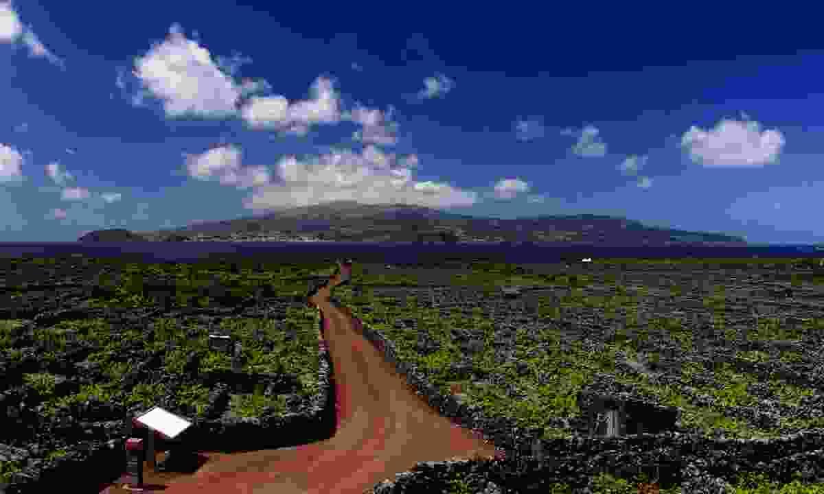 The Pico vineyards (Dreamstime)