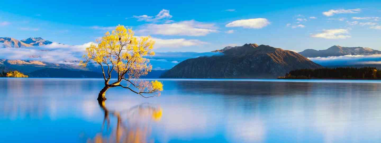 Wanaka Tree in Autumn, Wanaka, New Zealand (Tom Mackie)