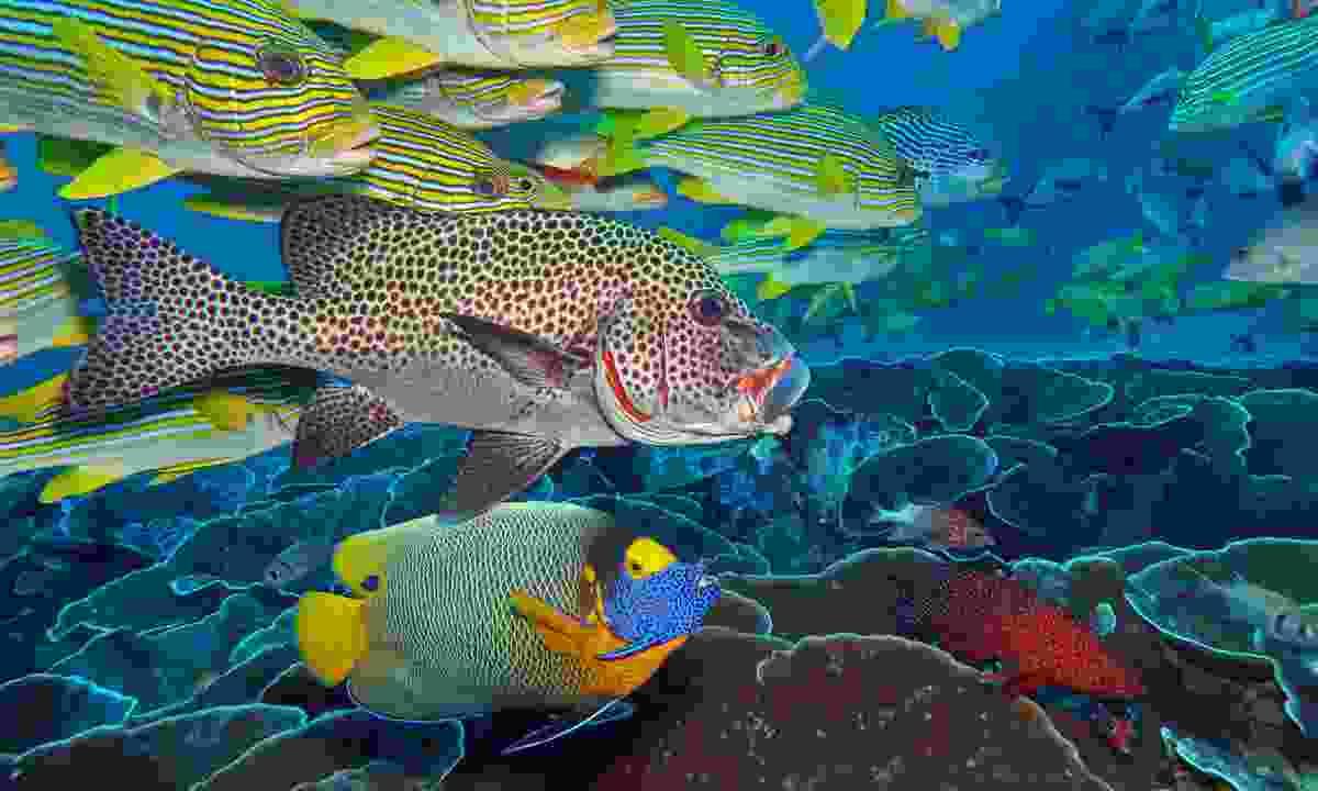 The kaleidoscopic colours of Raja Ampat (Dive Worldwide/Bjorn Smidt-Olsen)