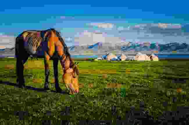 A horse grazing at Song Kul Lake, Kyrgyzstan (Shutterstock)