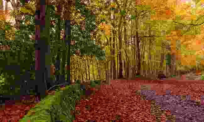 Autumn leaves Ashridge Estate, Hertfordshire (Shutterstock)