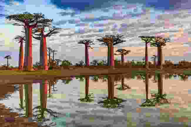 Avenue of the Baobabs, Madagascar (Shutterstock)