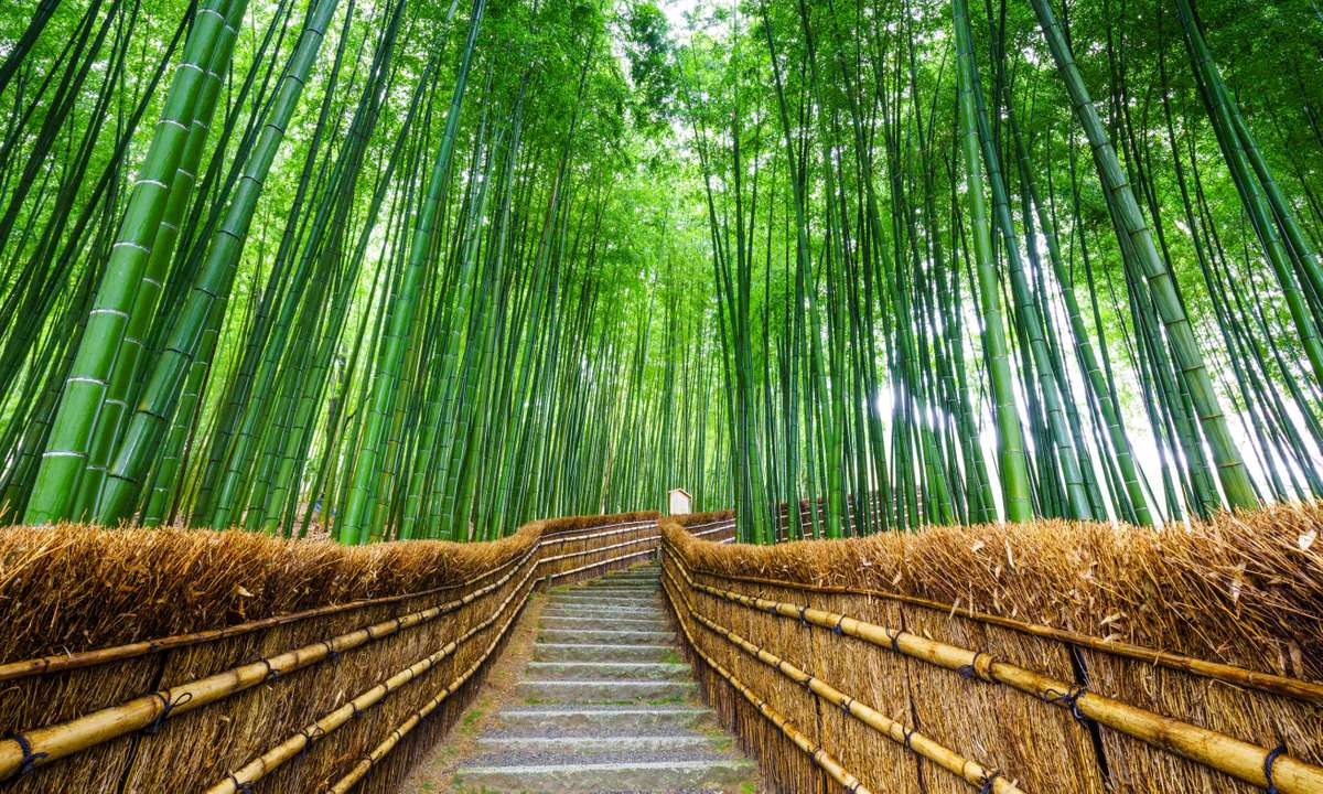 Path to bamboo forest, Arashiyama, Kyoto, Japan (Dreamstime)