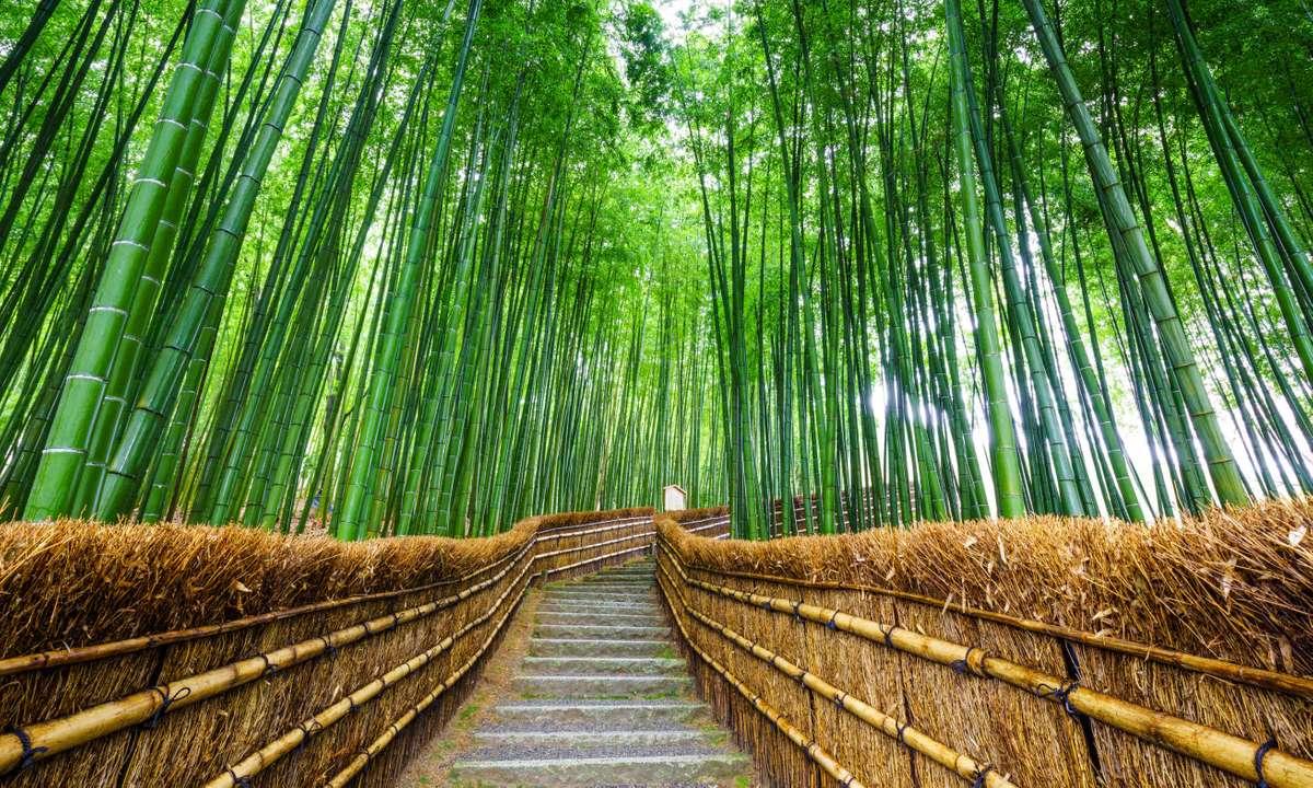 Path to bamboo forest, Arashiyama, Kyoto, Japan (Dreamstime)