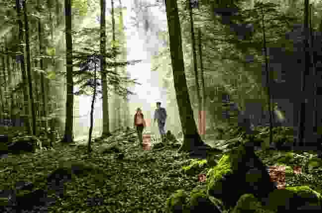 Walk through the Kočevski Rog (Ciril Jazbec)