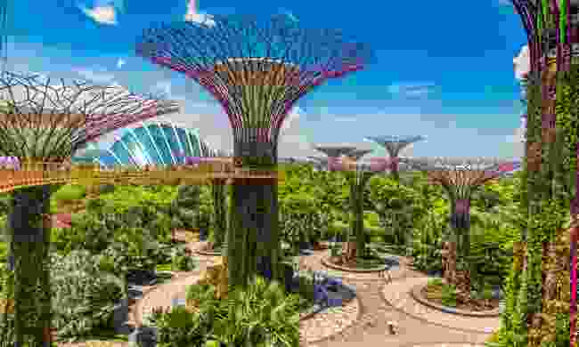 The supertrees at the Gardens by the Bay (Shutterstock)