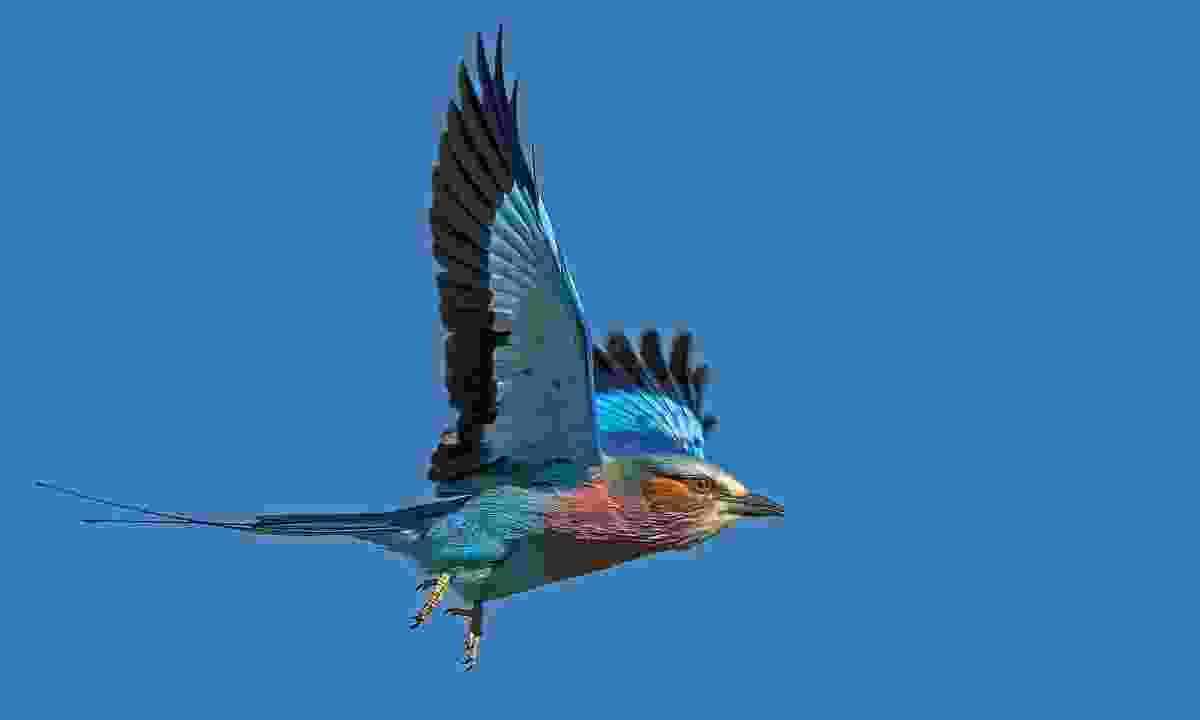 """The challenge was trying to get a clean image of a bird in flight."" (John Webster)"