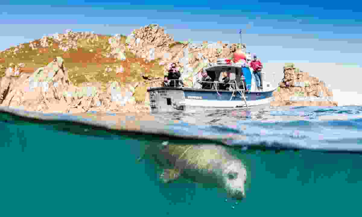 Seal in Lundy, off the coast of North Devon (Nick Blake)