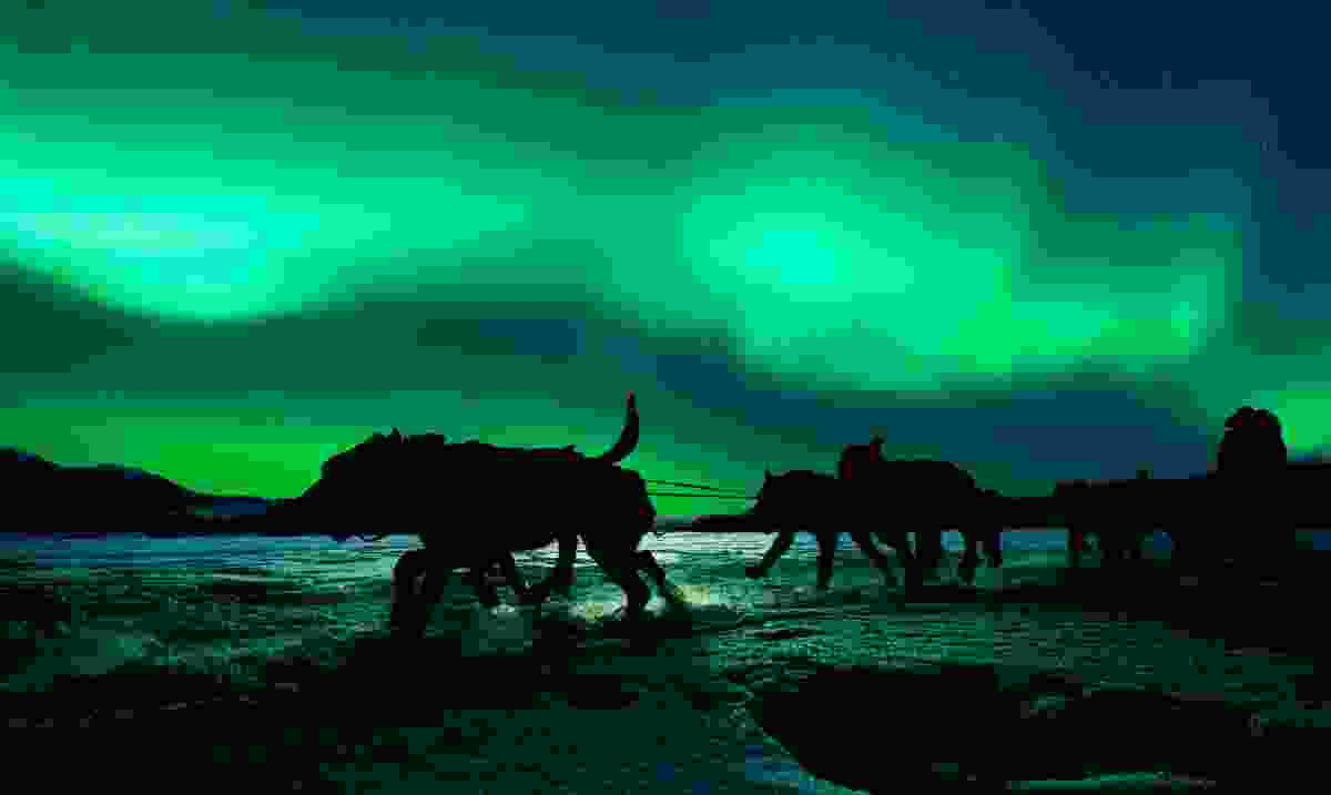 Silhouette of dog-sled team pulling sleigh with musher under the northern lights (Dreamstime)