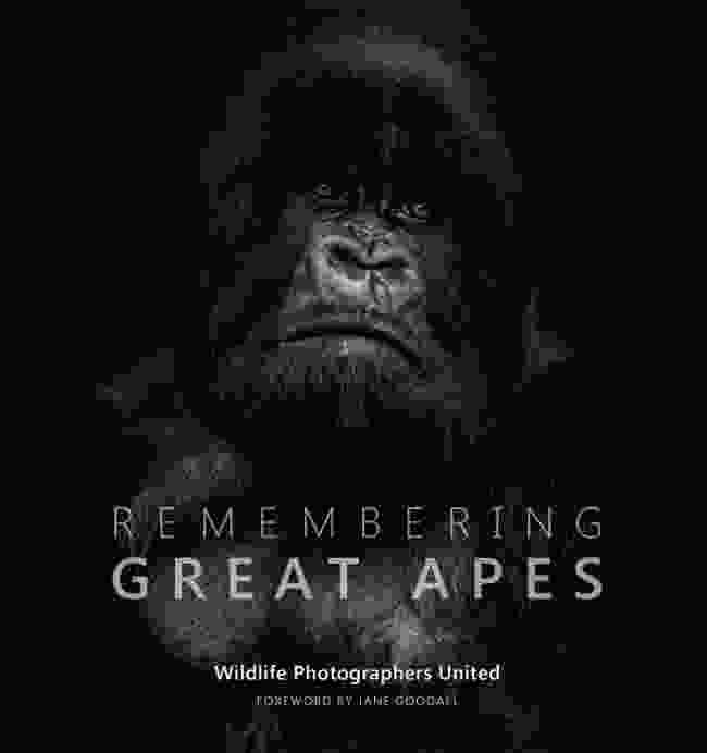 Mountain gorilla, Rwanda (Nelis Wolmarans)