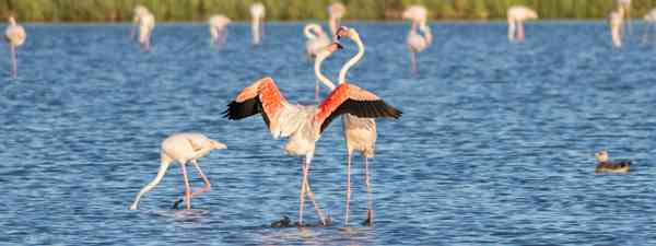 Flamingos visiting a nature reserve (Shutterstock)