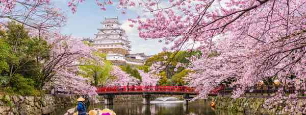 Cherry blossom in Japan (Shutterstock)
