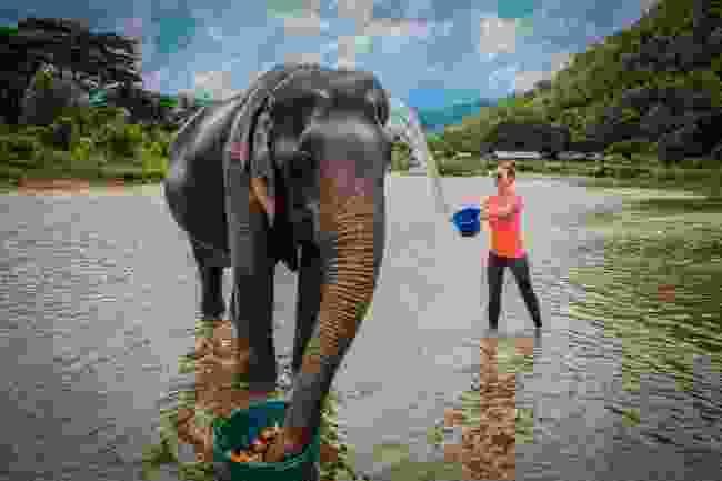 An elephant sanctuary (Shutterstock)