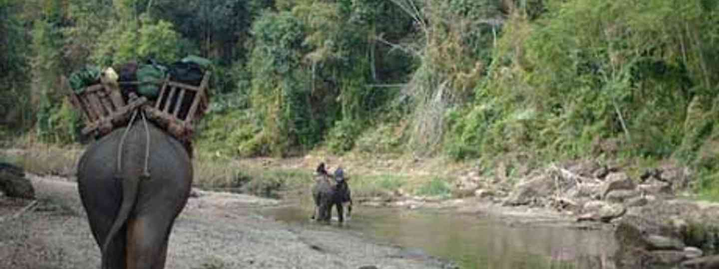 Conservation in Burma offers new issues and problems