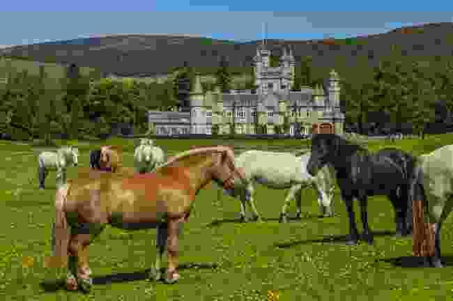 Horses near Balmoral Castle (Shutterstock)