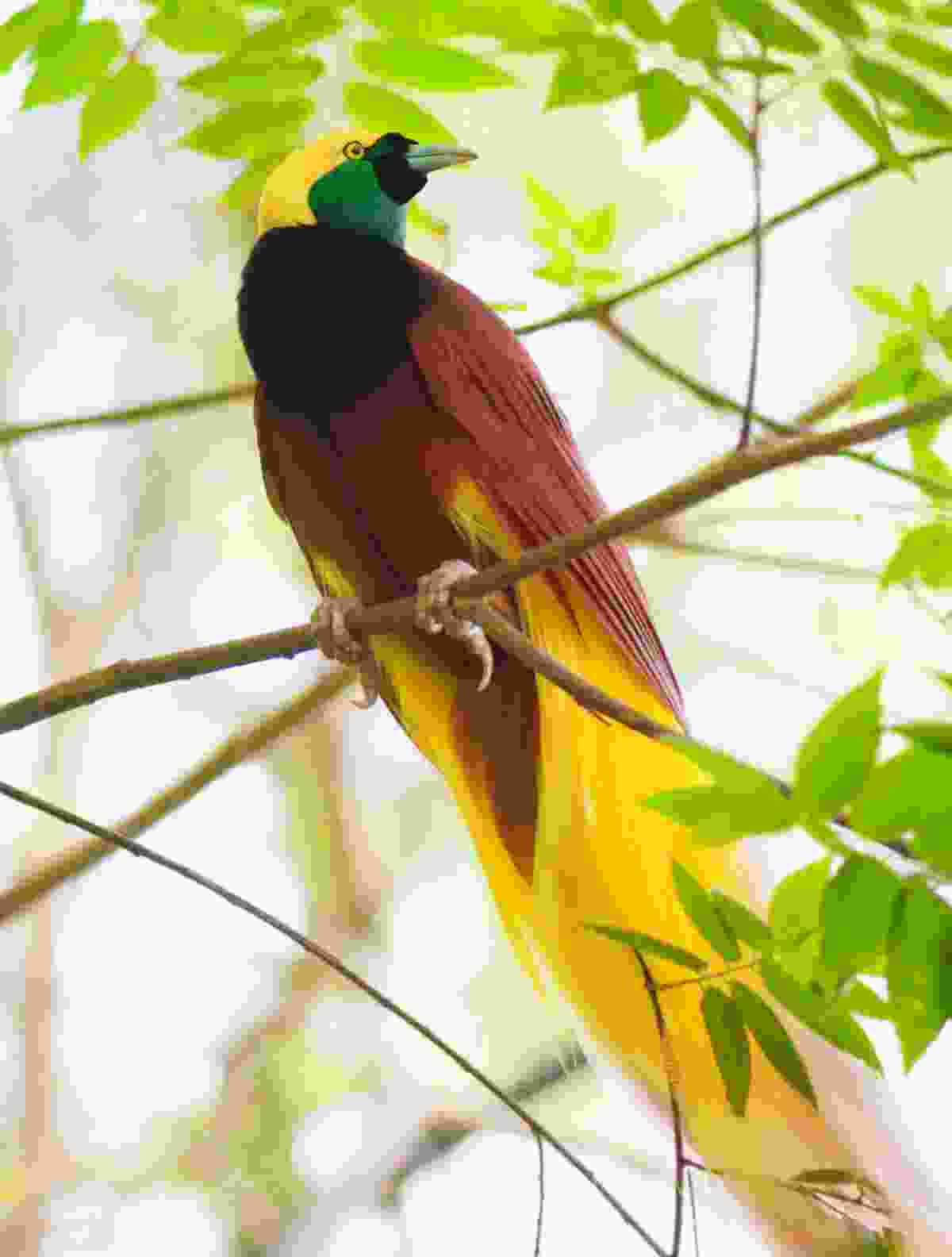 Birdlife of Papua New Guinea (Dreamstime)