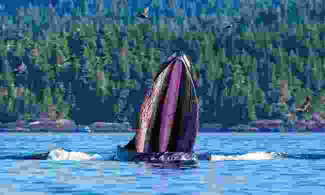 Kayak alongside whales in Canada (Wildlife Worldwide)