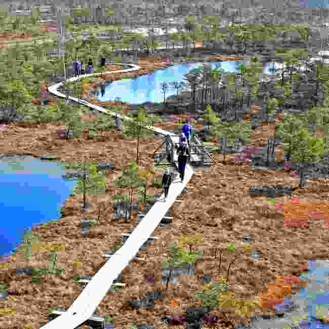 Ķemeri National Park bog trail (Shutterstock)