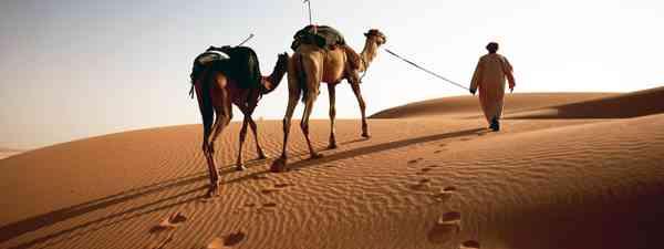 Leading camels into the Empty Quarter (Levison Wood)