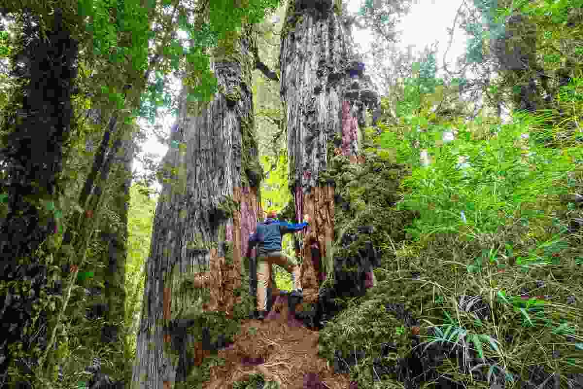 Pumalin National Park (Shutterstock)