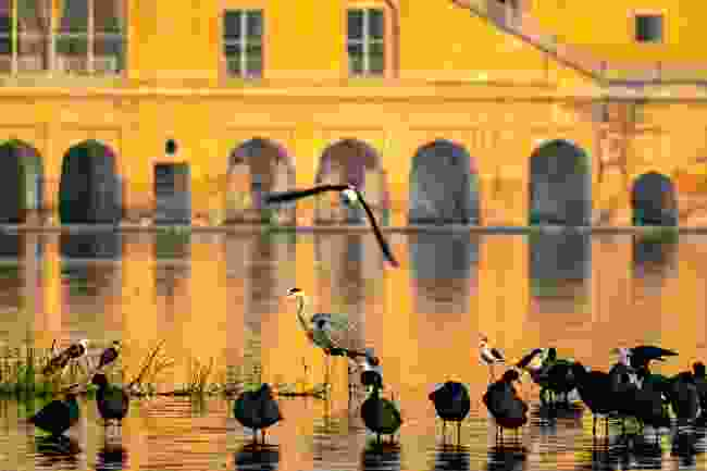 Birds gathered in front of the Jal Mahal (Shutterstock)