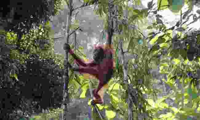 The Intrepid Foundation supports reforestation in Borneo (Shutterstock)